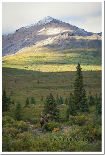 2438_Denali National Park-Alaska-USA_Canon EOS 5D Mark II, 106 mm, 1-160 sec at f - 5.6, ISO 400