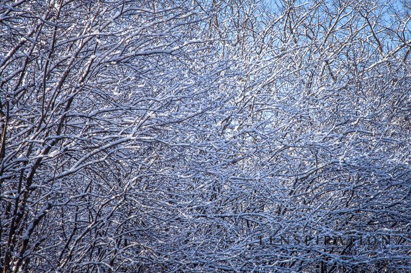 Winter Hangs On