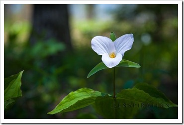 Flower in the Forest