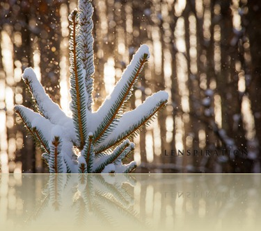 """Make Your Winter Pictures """"Pop"""""""