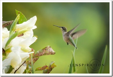 Lesson from the Hummingbird