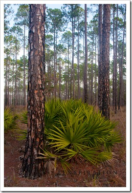 What to see at Okefenokee