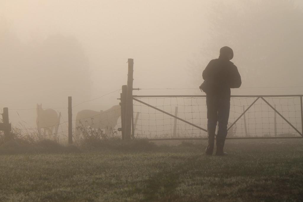 Fog Scenery