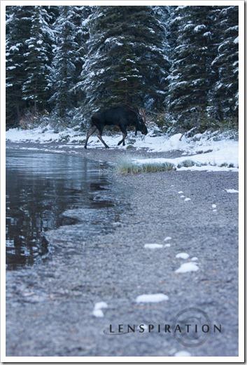 0506_Many Glacier-Montana-USA_Canon EOS 40D, 70 mm, 1-60 sec at f - 4.5, ISO 100