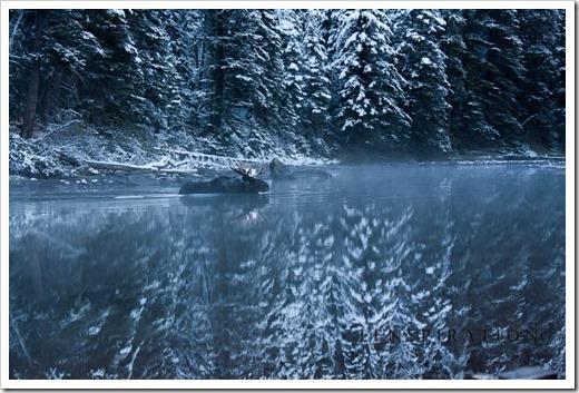 0482_Many Glacier-Montana-USA_Canon EOS 40D, 70 mm, 1-60 sec at f - 4.5, ISO 100