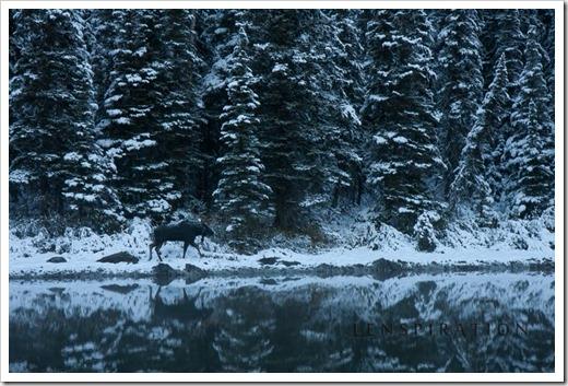 0472_Many Glacier-Montana-USA_Canon EOS 40D, 55 mm, 1-40 sec at f - 11, ISO 100