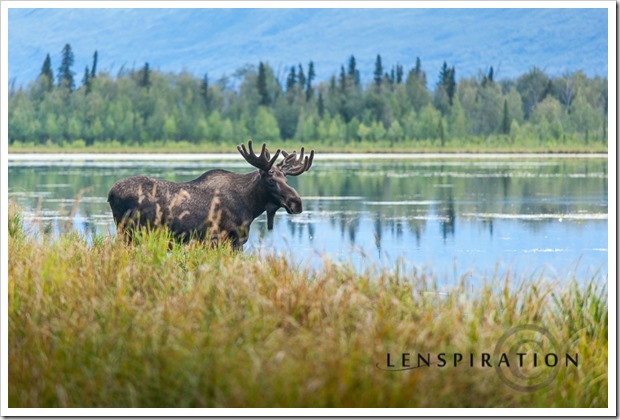 0169_Palmer-Alaska-USA_Canon EOS 5D Mark II, 200 mm, 1-50 sec at f - 4.0, ISO 800