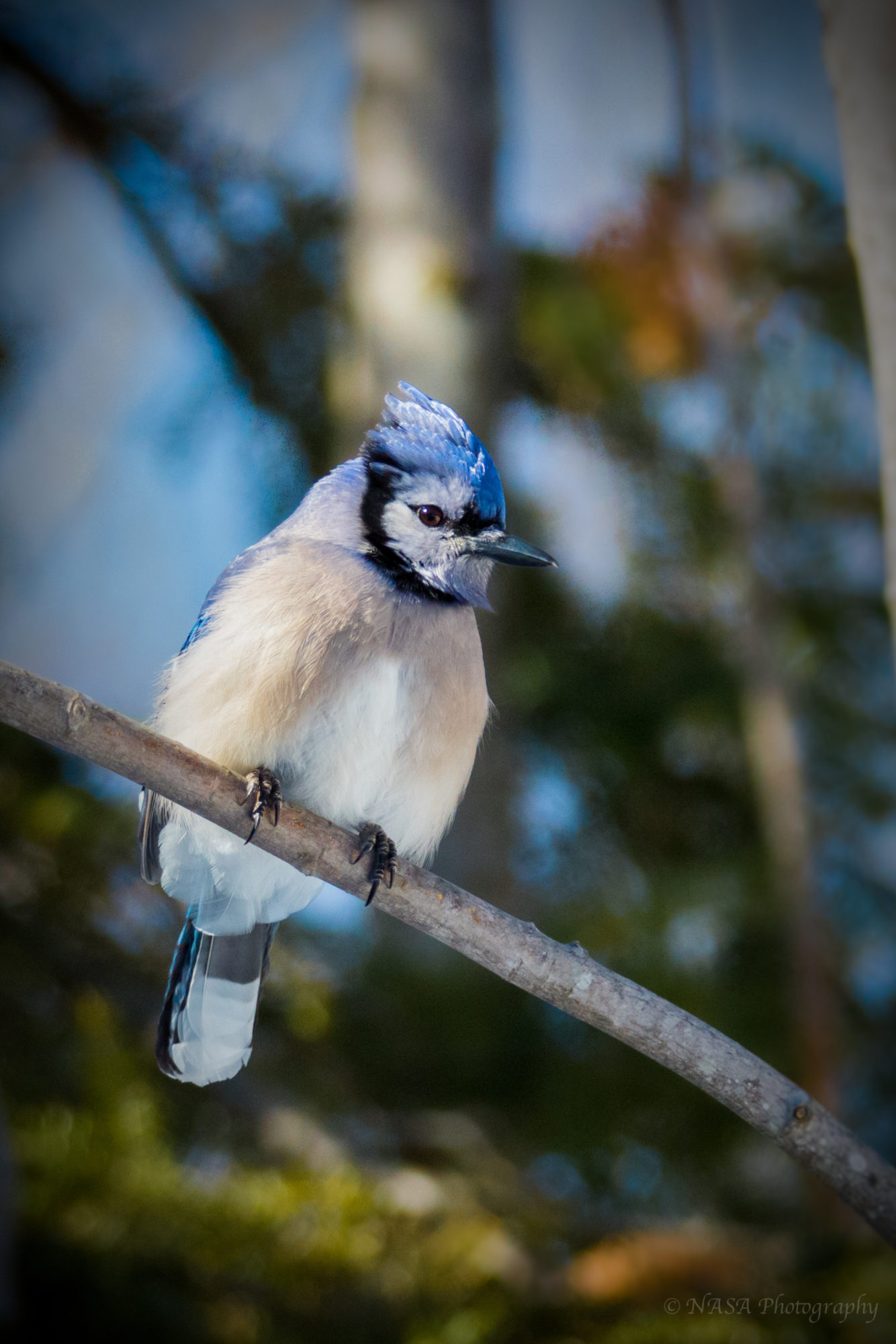Reply To: Posing Bluejay