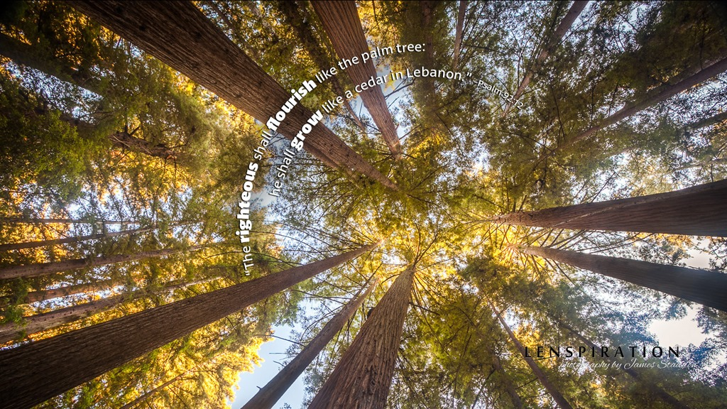 Finding the Perfect Redwoods Picture