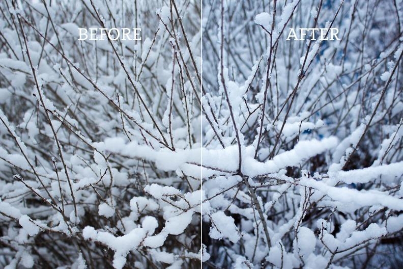 snowy-bush_comparisoin