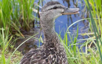 Reply To: a duck in the park