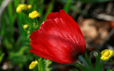 Flower from Israel