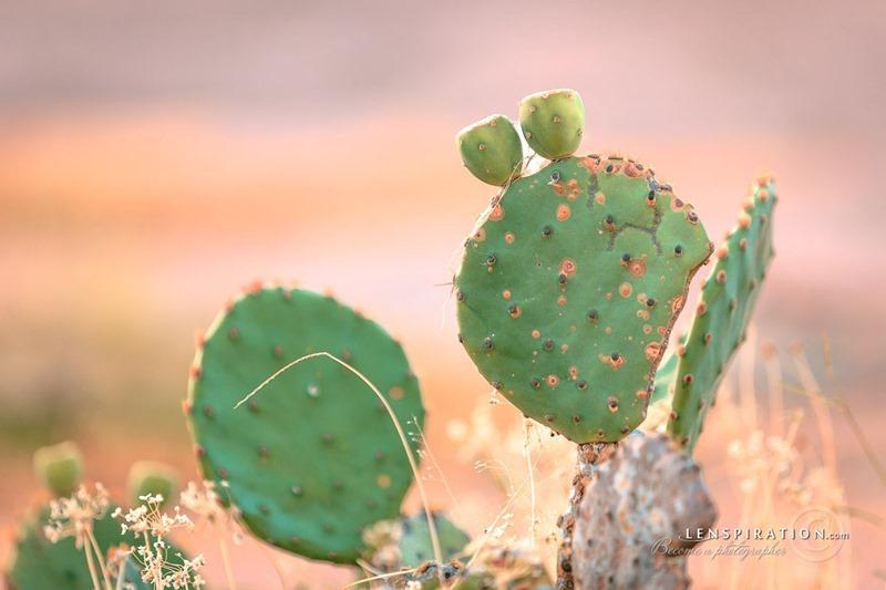 Dry Cactus Plant