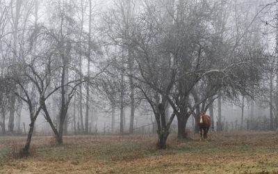Reply To: Horses In The Fog
