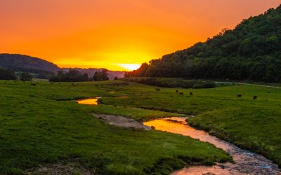 Sunset over Creek and Pasture