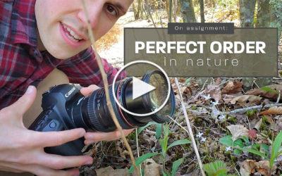 On Assignment: Perfect Order in Nature