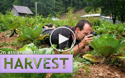 On Assignment: Harvest!