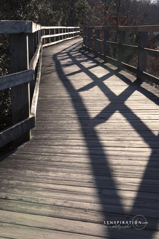 Boardwalk Through the Marsh (vertical)