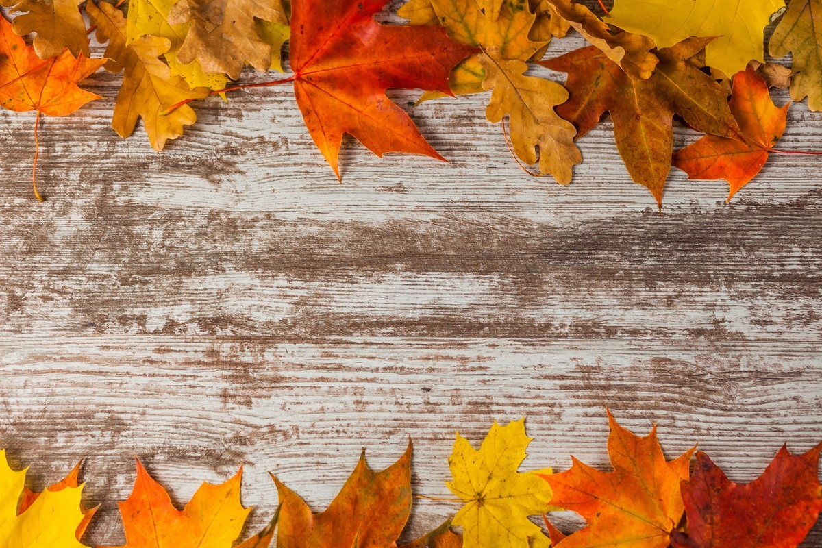 Frame of autumn leaves on wooden background. Vertical. Yellow Red.